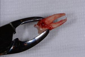 Case 8 - Figure 10